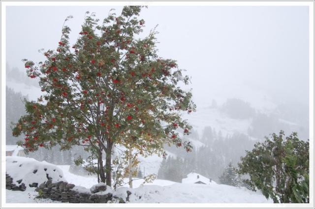 neige-3